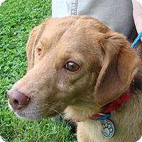 Adopt A Pet :: Pete - Erwin, TN