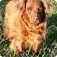 Adopt A Pet :: Alfie - Austin, TX