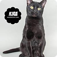 Adopt A Pet :: Kira - Wyandotte, MI