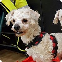 Adopt A Pet :: Ricky - Union Grove, WI