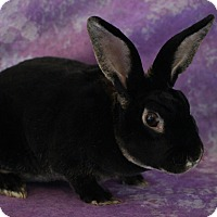 Adopt A Pet :: Oliver - Wilmington, NC