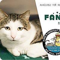 Adopt A Pet :: Fang - Davenport, IA