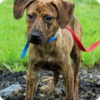Adopt A Pet :: Craig - Waldorf, MD