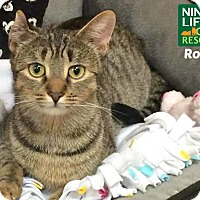 Adopt A Pet :: Rose - Oakville, ON
