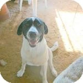 Retriever (Unknown Type) Mix Dog for adoption in Katy, Texas - Pepper