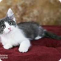 Adopt A Pet :: Periwinkle - Eagan, MN