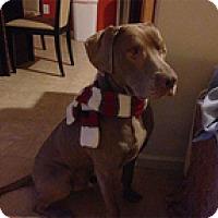 Adopt A Pet :: BudBud - Madison, WI