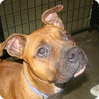 Adopt A Pet :: joy - Henderson, KY
