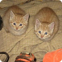 Adopt A Pet :: Twitch - Hamilton, ON