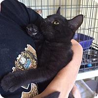 Adopt A Pet :: Sugarloaf - Devon, PA