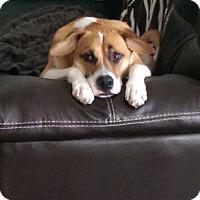 Adopt A Pet :: Kingly Pete - Issaquah, WA