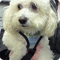 Adopt A Pet :: Nancy - East Hanover, NJ