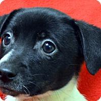Adopt A Pet :: Prancer - Erwin, TN