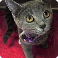 Adopt A Pet :: Blue Betty - Chattanooga, TN
