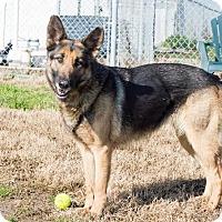 Adopt A Pet :: Zena - Walnut Creek, CA