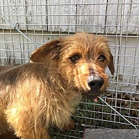 Adopt A Pet :: Einstein - Snyder, TX