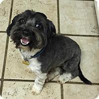 Adopt A Pet :: Barney - Fresno, CA