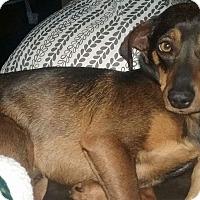 Adopt A Pet :: Max - Manhattan, KS