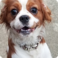 Adopt A Pet :: Love Bug - Fairview Heights, IL