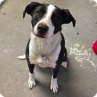 Adopt A Pet :: Luna - Greensburg, PA