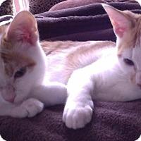 Adopt A Pet :: Juniper & Jiminey Cricket- - Arlington, VA