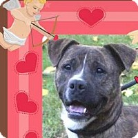 Adopt A Pet :: EDDY:Low Fees-Neutered - Red Bluff, CA