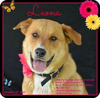 Labrador Retriever/Shepherd (Unknown Type) Mix Dog for adoption in Plano, Texas - Leona