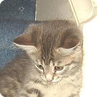 Adopt A Pet :: LILAC - 2013 - Hamilton, NJ