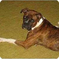 Adopt A Pet :: Cletus - Albany, GA