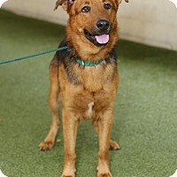 Adopt A Pet :: Miracle Max - Mission Viejo, CA
