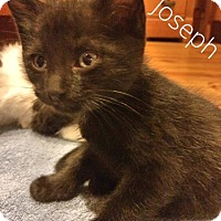 Adopt A Pet :: Joseph - McDonough, GA