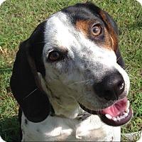 Adopt A Pet :: Otis - Knoxville, TN
