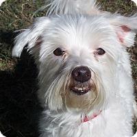 Adopt A Pet :: BASKIN - Odessa, FL