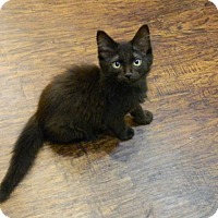 Adopt A Pet :: Baxter - The Colony, TX