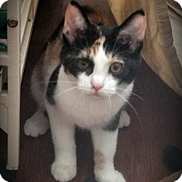 Adopt A Pet :: Zara - Fairborn, OH