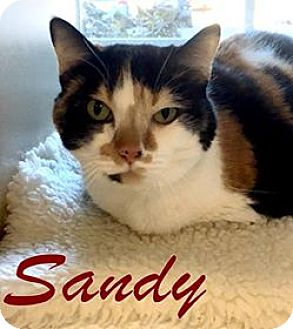 Calico Cat for adoption in Gloucester, Virginia - SANDY
