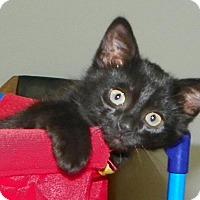 Adopt A Pet :: Parker - Fort Pierce, FL