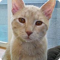 Adopt A Pet :: Chippy - Howell, MI