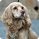 Adopt A Pet :: Pax