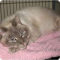 Adopt A Pet :: Cecelia - Shelton, WA