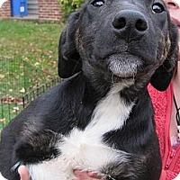 Adopt A Pet :: Charlie (low adoption fee!) - South Jersey, NJ