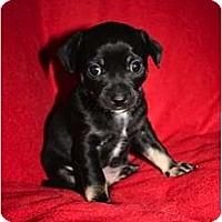 Adopt A Pet :: Bridger - Estes Park, CO