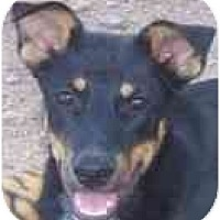 Adopt A Pet :: Bonsai - Phoenix, AZ