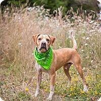 Adopt A Pet :: Bruno - Crescent City, CA