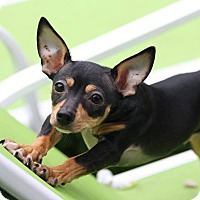 Adopt A Pet :: Jackson - Oak Creek, WI