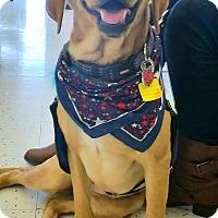 Adopt A Pet :: Gillian - Coppell, TX