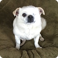 Adopt A Pet :: Theo - Temecula, CA