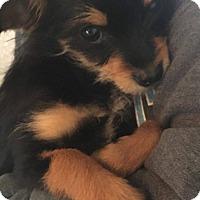 Adopt A Pet :: Ziggy - Oakley, CA