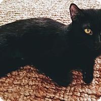 Adopt A Pet :: Myna the Bold - Los Angeles, CA