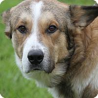 Adopt A Pet :: Cooper - Marietta, OH